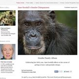 国家地理杂志:珍·古道尔的猩猩们