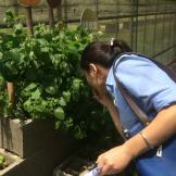 有机农场丨应用材料上海有机农场生态游