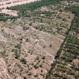 百万植树计划   2020年内蒙种植工作完成