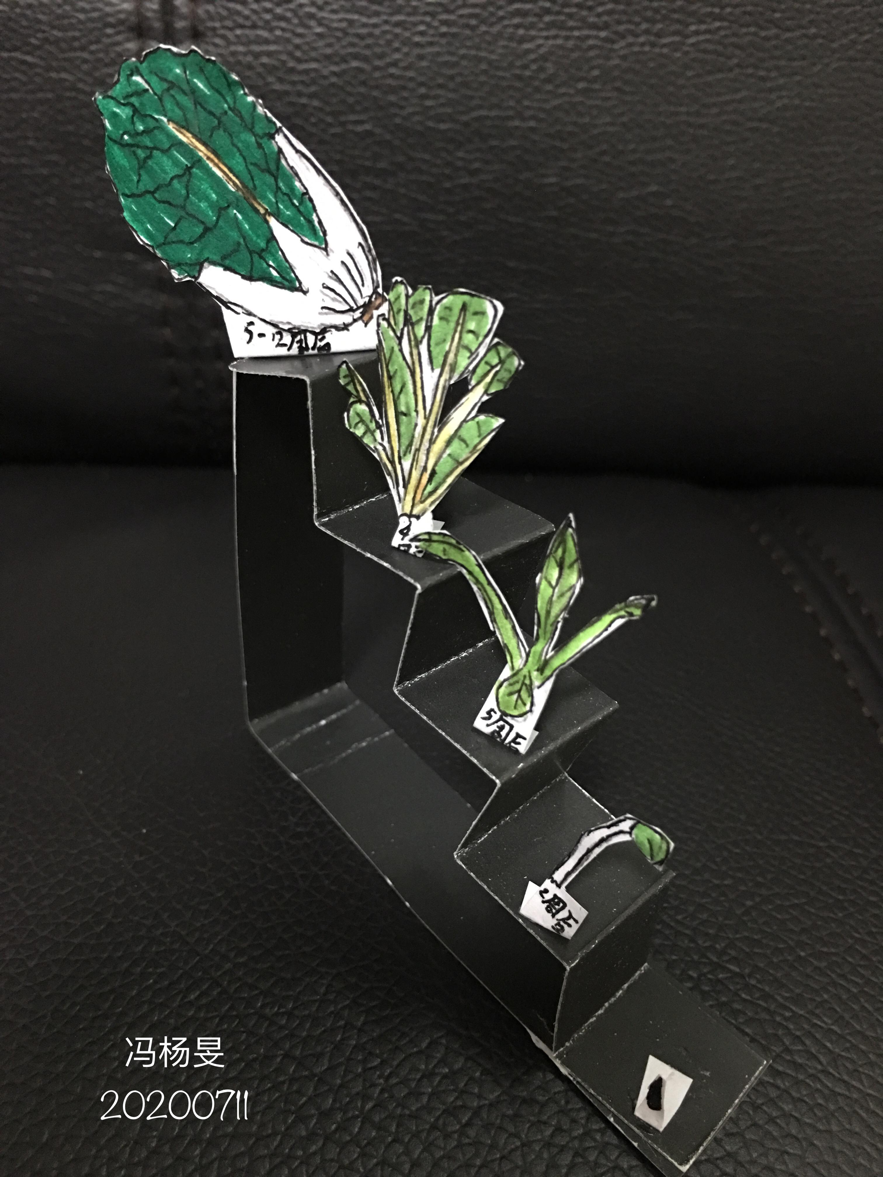 图片包含 桌子, 绿色, 游戏机, 花  描述已自动生成
